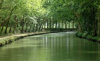 calm tree-lined canal