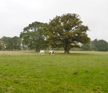 field in Holton Lee, Dorset